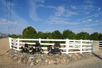 Luxe maison de commentaires sur 15 acres agrumes Horse Ranch
