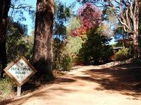 Eucalyptus House Pemberton