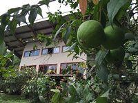 Spaceous Loft Style Bamboo Cob Natural House On 100 Acre Organic Farm Retreat
