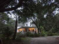 A quiet preservation forest experience within a central Charleston location